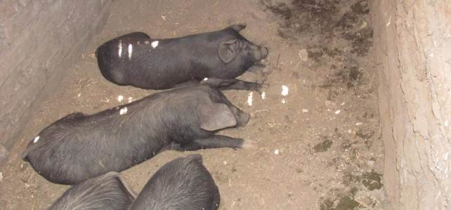 Animal Husbandry Farm Project – Curriculum & Food